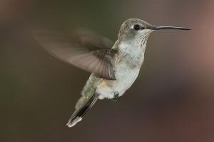 Google Humminbird Update